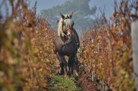 Biodynamische wijnen